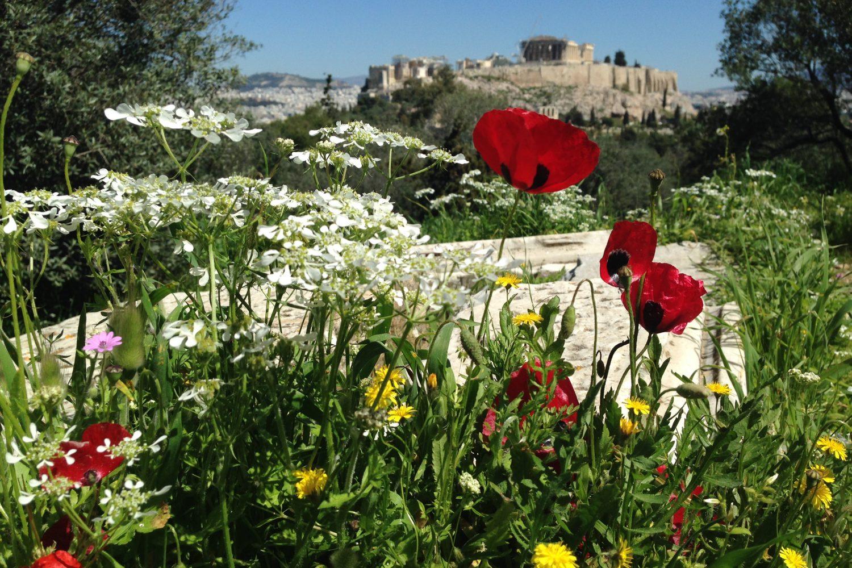 Plaka of Athens Walking Tour with Picnic